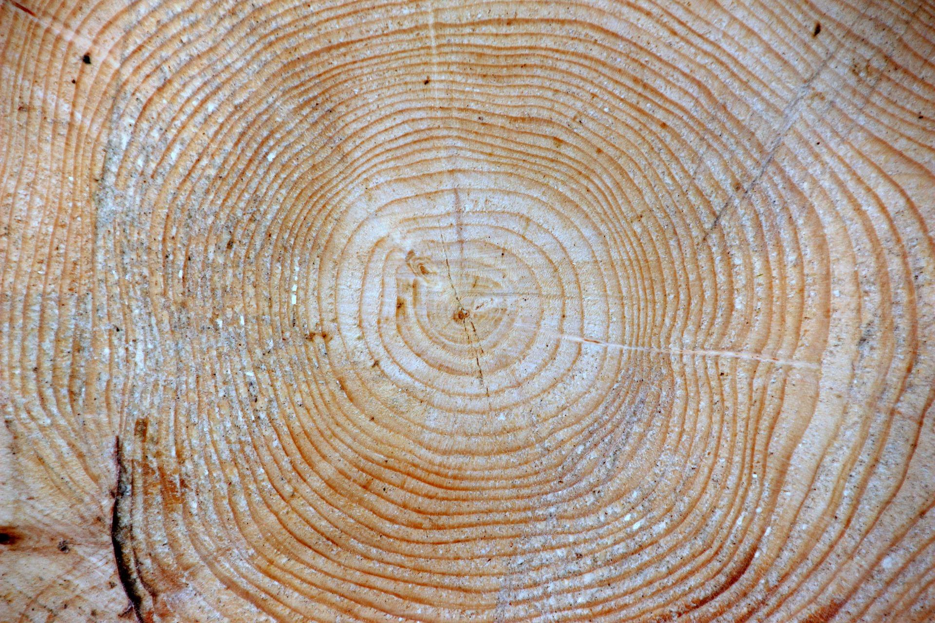 Bierzeltgarnitur Aus Holz U2013 Qualitätskriterien Für HolzgarniturenTop  Bierzeltgarnitur Kaufen
